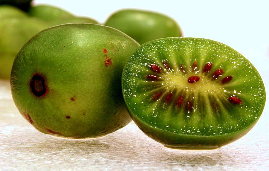 Mini-Kiwi. © Hiperpinguino